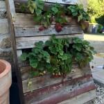 Pallet Vertical Planter for Your Garden